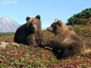 Reserves and natural parks of Kamchatka